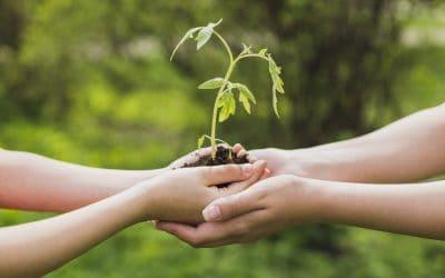 Hva er miljøledelse? Og hvorfor er det fremtiden?